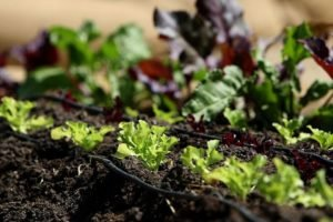 What is Organic gardening & Advantages?